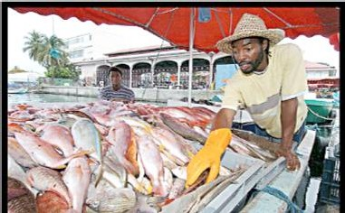 GUADELOUPE. FILIÈRE PÊCHE ET AQUACULTURE La Région Guadeloupe poursuivra le soutien apporté à la profession