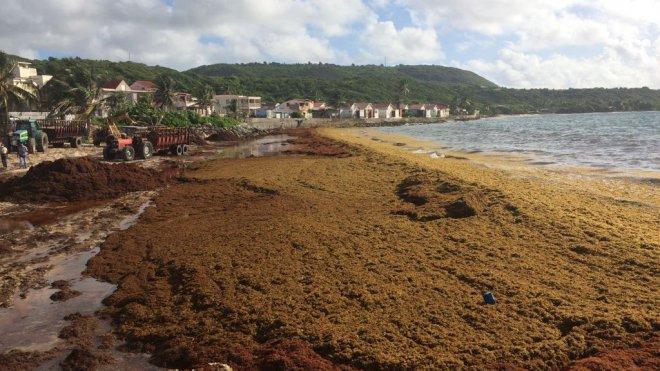 Guadeloupe la mission sargasses aux saintes ce mercredi 13 d cembre point de situation et - Les saintes glaces 2017 ...