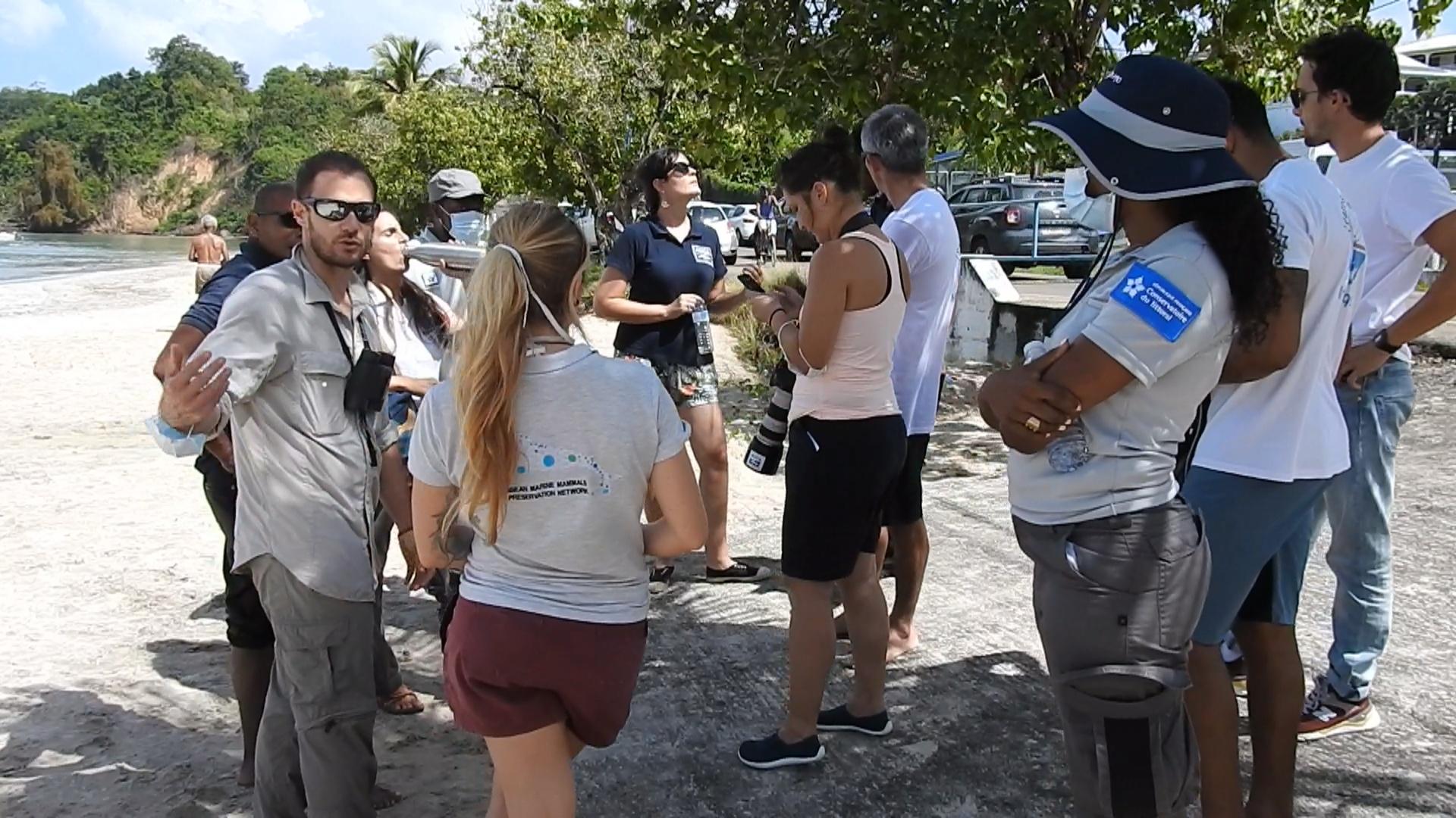 [Vidéo] Onews Martinique. Un cachalot rode non loin d une plage commune de Trinité. Tout mis en place  pour qu'il regagne le large.