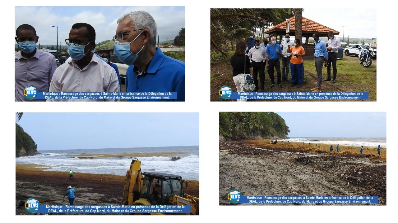 [Vidéo] Onews Martinique. Ramassage des sargasses à Sainte Marie