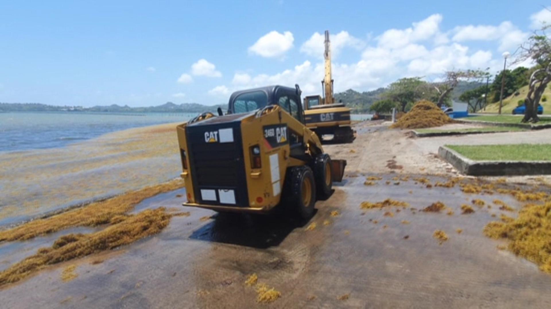 [Vidéo] Onews Martinique. Lutte contre les sargasses. Que font les Autorités (Micro trottoir Kmt)