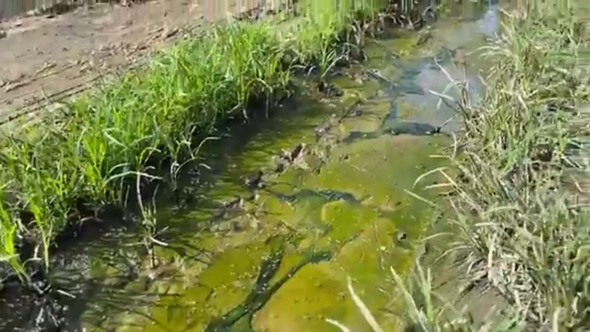 [Vidéo] Onews Guadeloupe. Ce que vit une habitante en raison des eaux usées (canal 10)