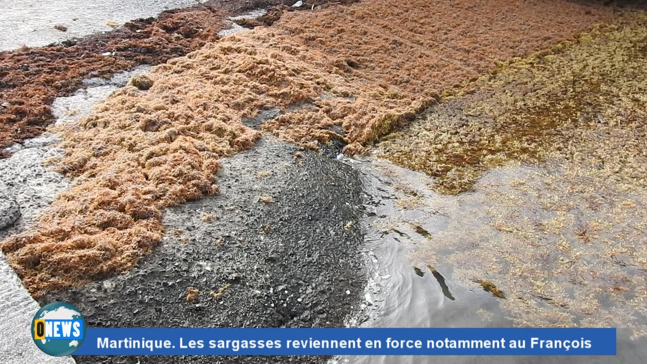 [Vidéo] Onews Martinique . Les sargasses reviennent en force notamment au François.