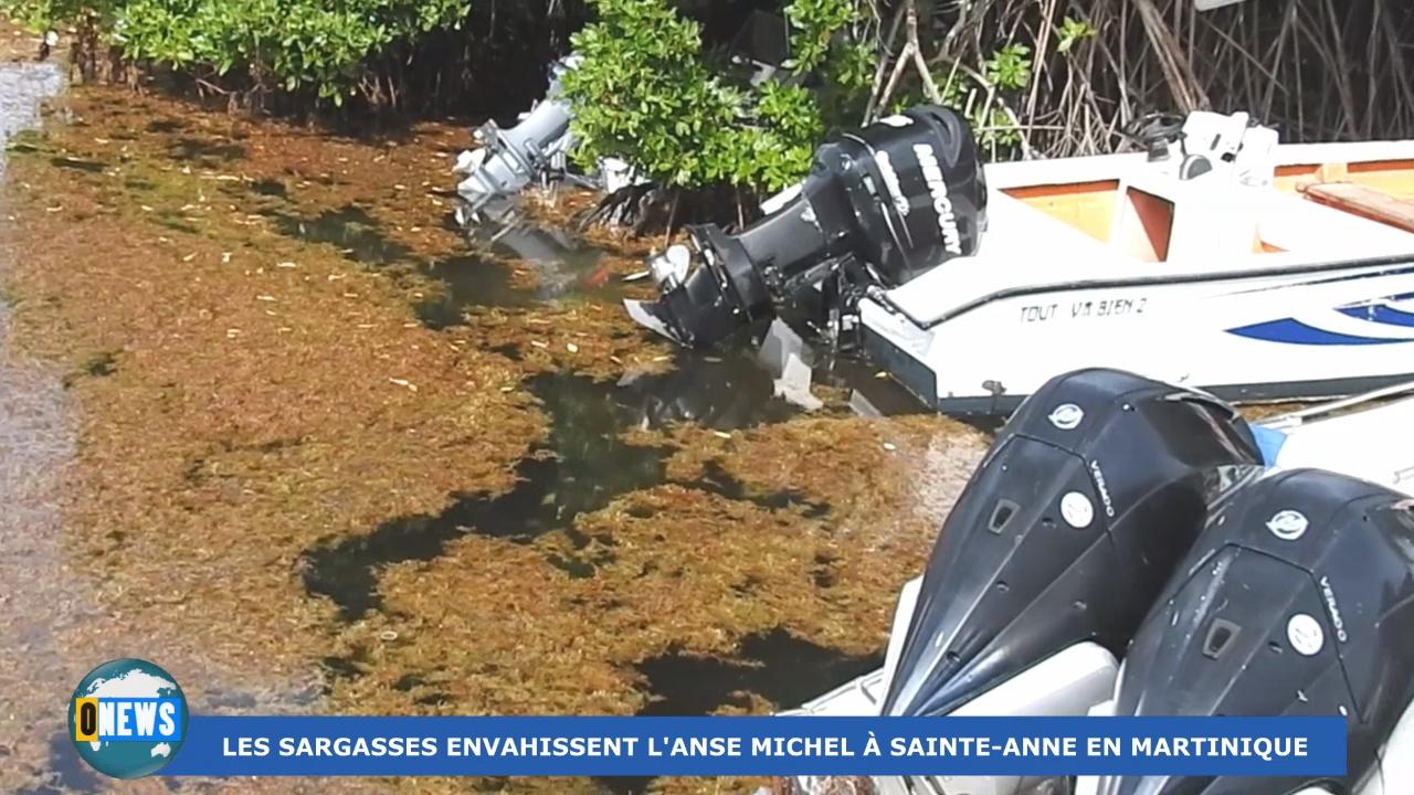 [Vidéo] Onews Martinique. Arrivée massive des sargasses à l'Anse Michel à Sainte Anne