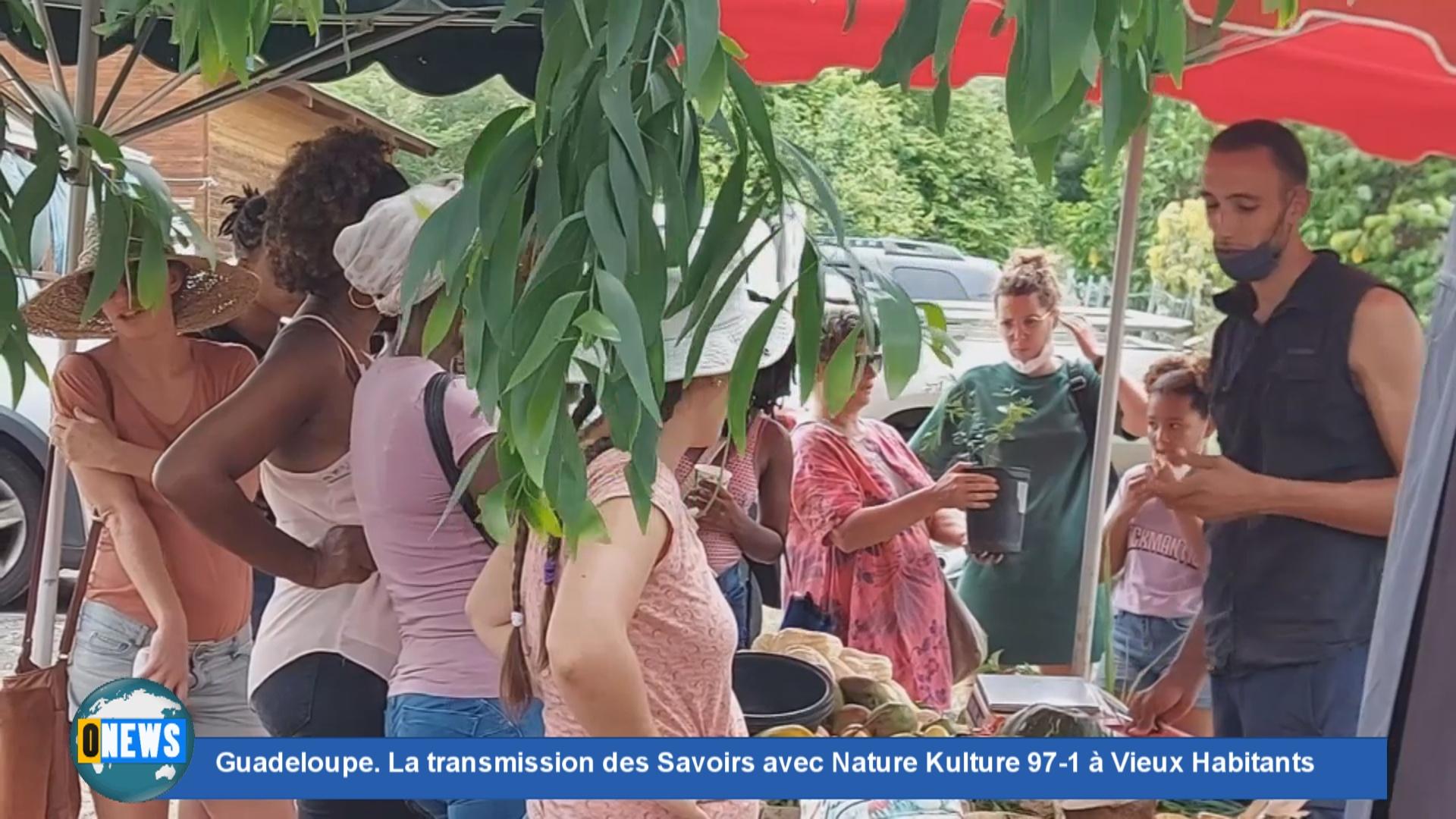 [Vidéo] Onews Guadeloupe. La transmission des Savoirs avec Nature Kulture 97-1 à Vieux Habitants