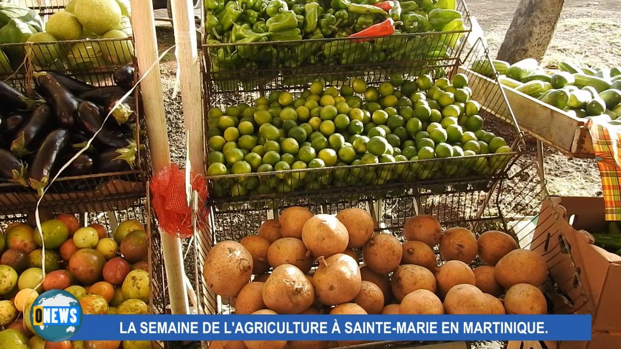 [Vidéo] Martinique. Semaine de l'Agriculture à Sainte Marie